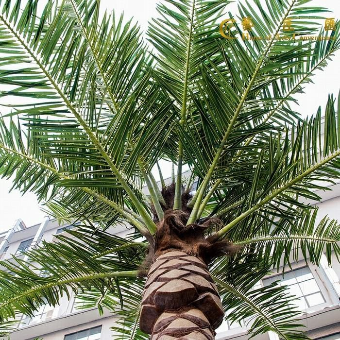 Artificial Canary Date Palm Tree